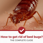 How To Get Rid Of Bed Bugs (COMPLETE GUIDE)