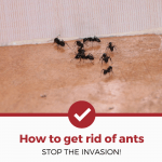 How To Get Rid of Ants (COMPLETE GUIDE)