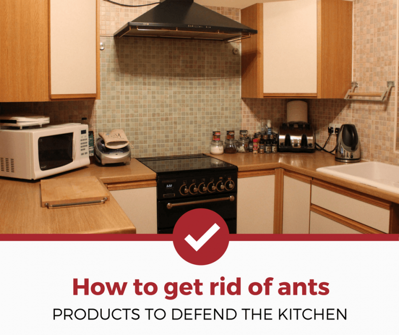 Best Ant Killers for The Kitchen (2019 Edition) - Pest ...