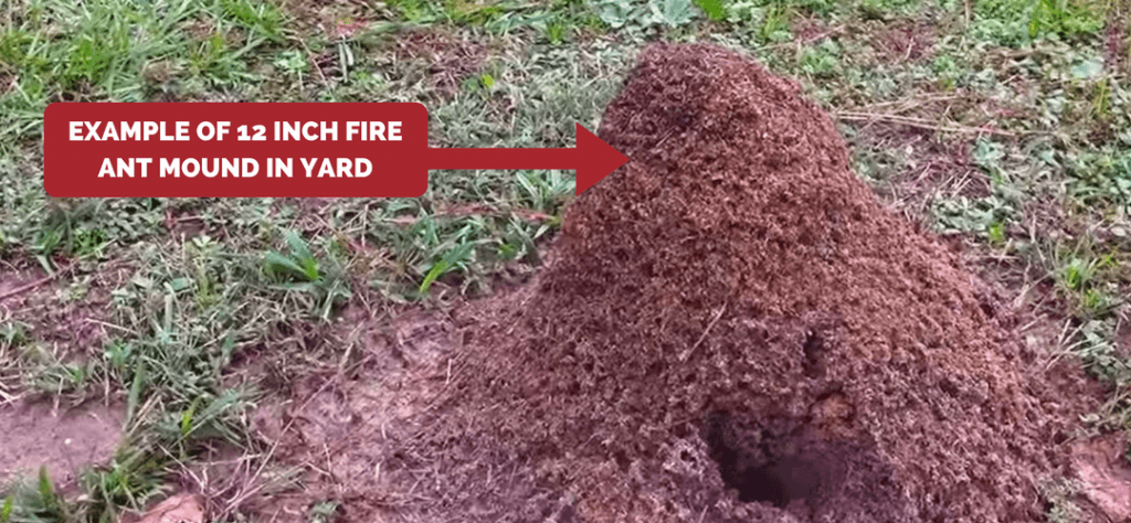 Fire ant mound height