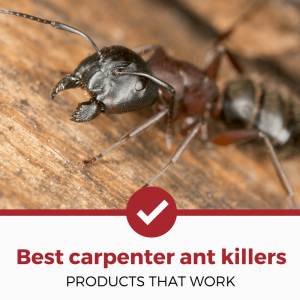 best carpenter ant killers