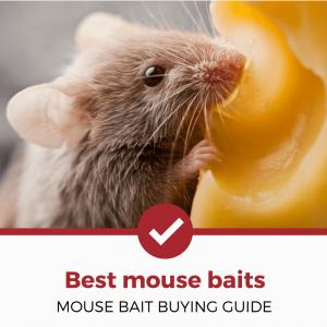 best mouse baits