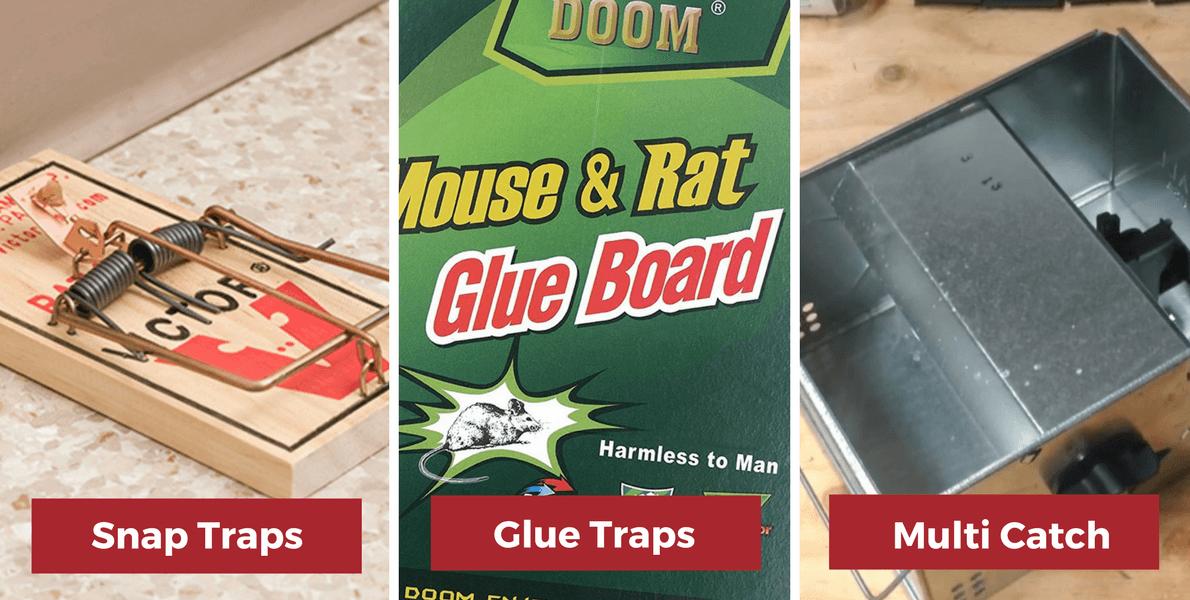 best mouse traps