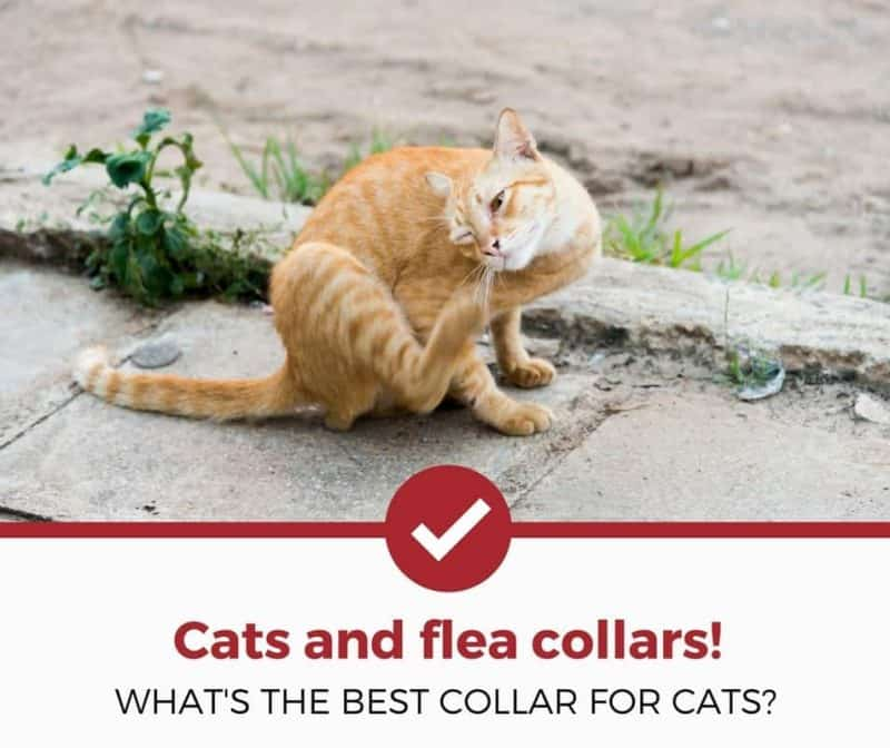 Seresto Flea Collar Problems Cats