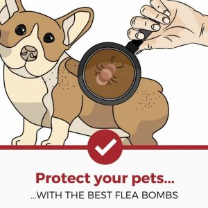 best flea foggers and bombs