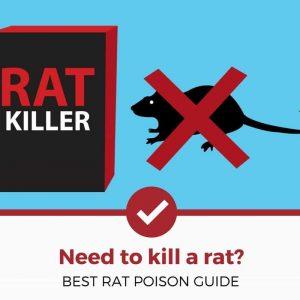 best rat poisons