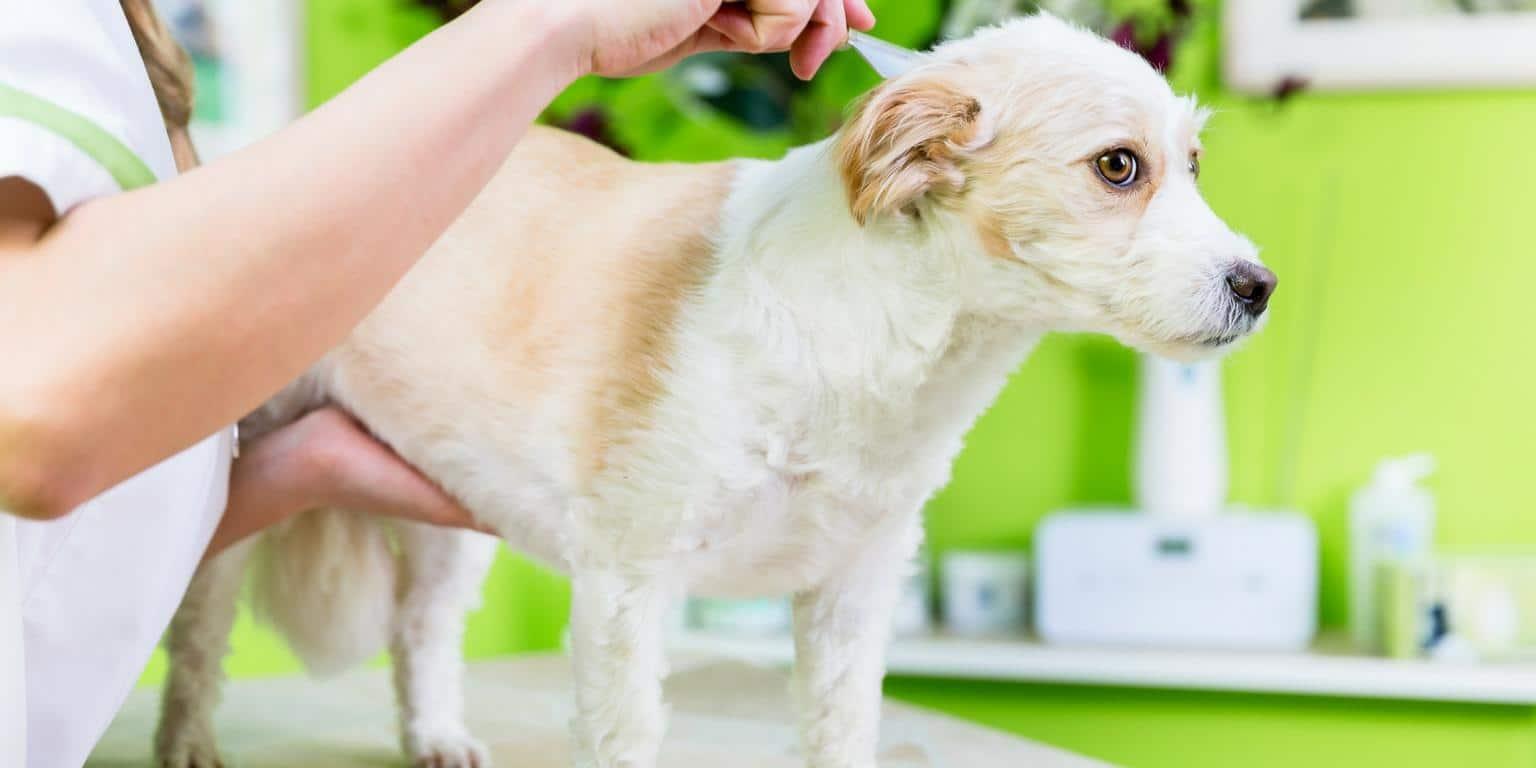 dog check up for fleas