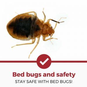 bed bug safety