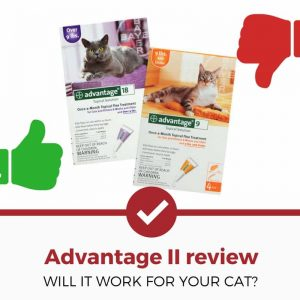 advantage II for cats review