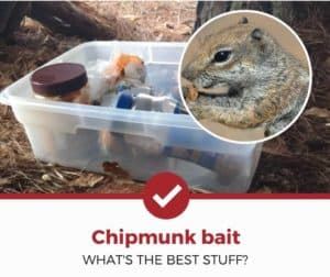 Top 5 Best Chipmunk Baits (Detailed Buying Guide)