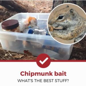 best chipmunk bait to lure your rodent into captivity