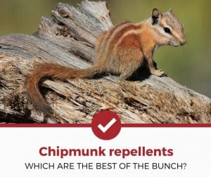 Top 5 Best Chipmunk Repellents (Save Your Sanity!)