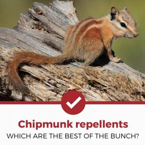 best chipmunk repellents