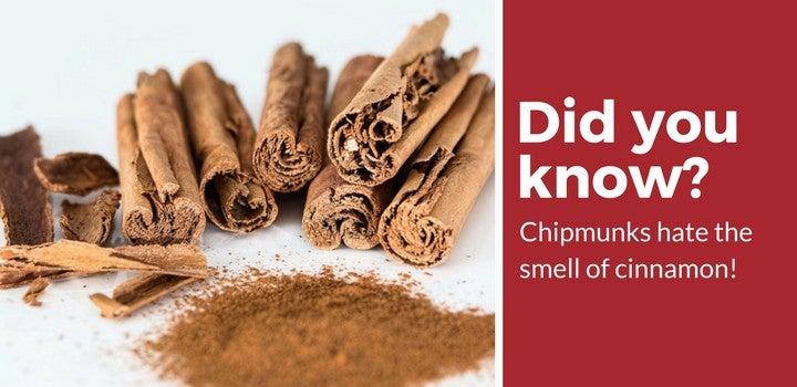 chipmunks hate cinnamon
