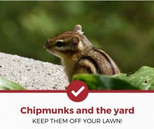 How To Keep Chipmunks Out of Your Yard and Garden!