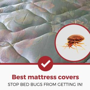 best bed bug mattress covers and protectors