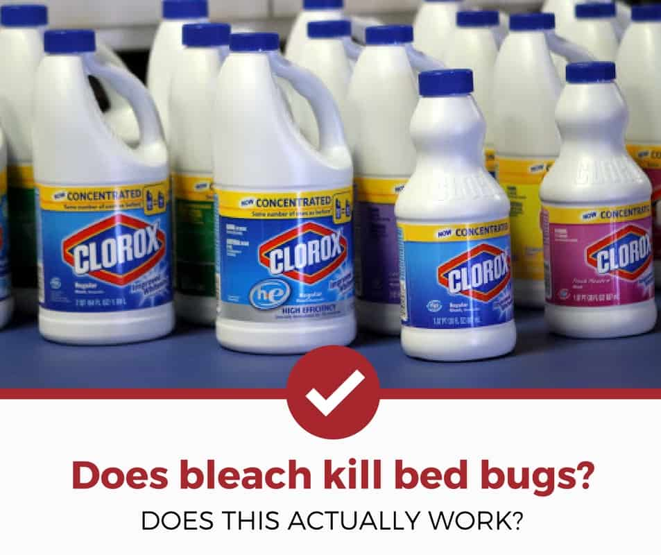 Does Bleach Kill Bed Bugs The Answer Might Surprise You Pest