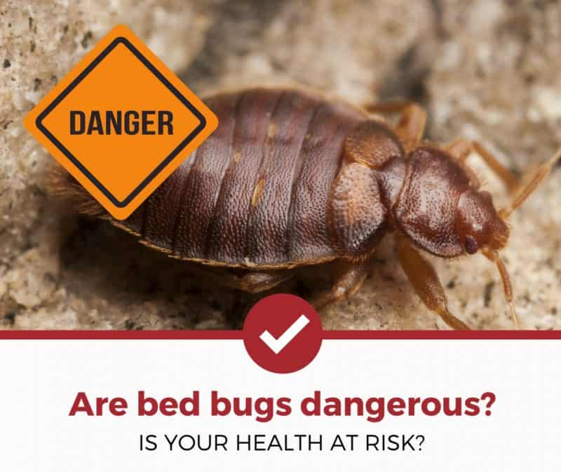 Are Bed Bugs Dangerous 3 Things You Should Know Pest