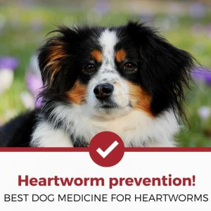 best dog heartworm prevention and medicine