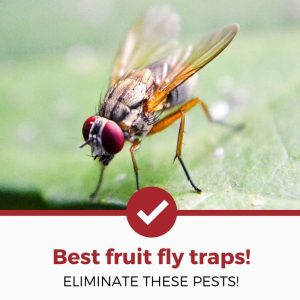 best fruit fly traps