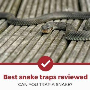 best snake traps