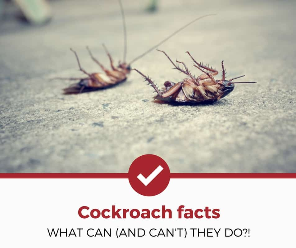 can cockroaches fly, swim, or jump