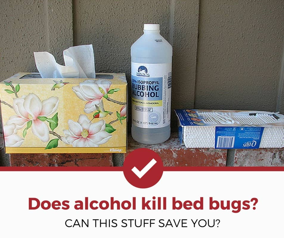 Does Rubbing Alcohol Kill Bed Bugs? (Possibly… click to learn