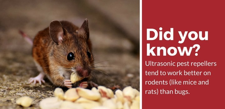 ultrasonic pest repellers better for rodents