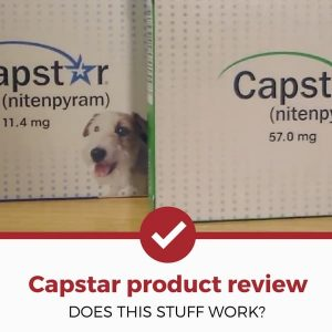 capstar review