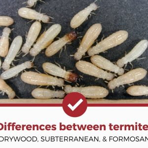 differences between termites types
