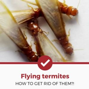 get rid of flying termites