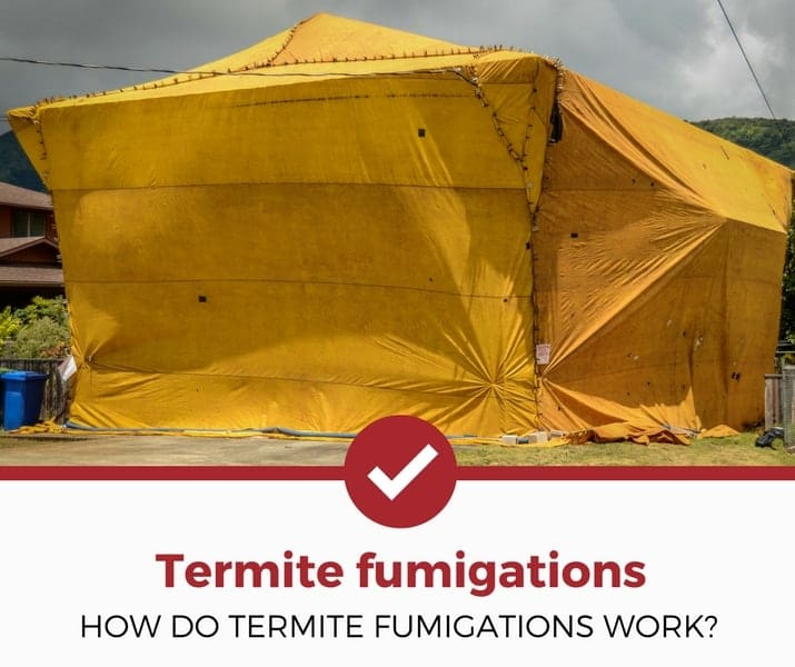 how do termite fumigations work