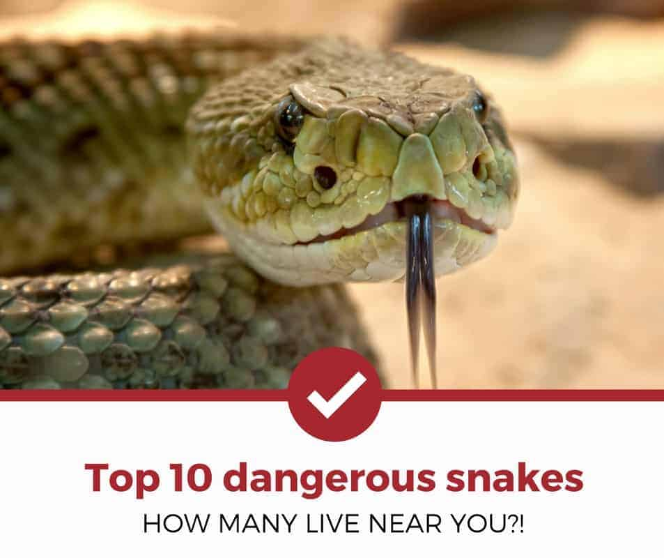 top 10 dangerous snakes