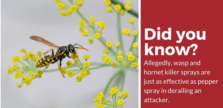 wasp hornet spray facts