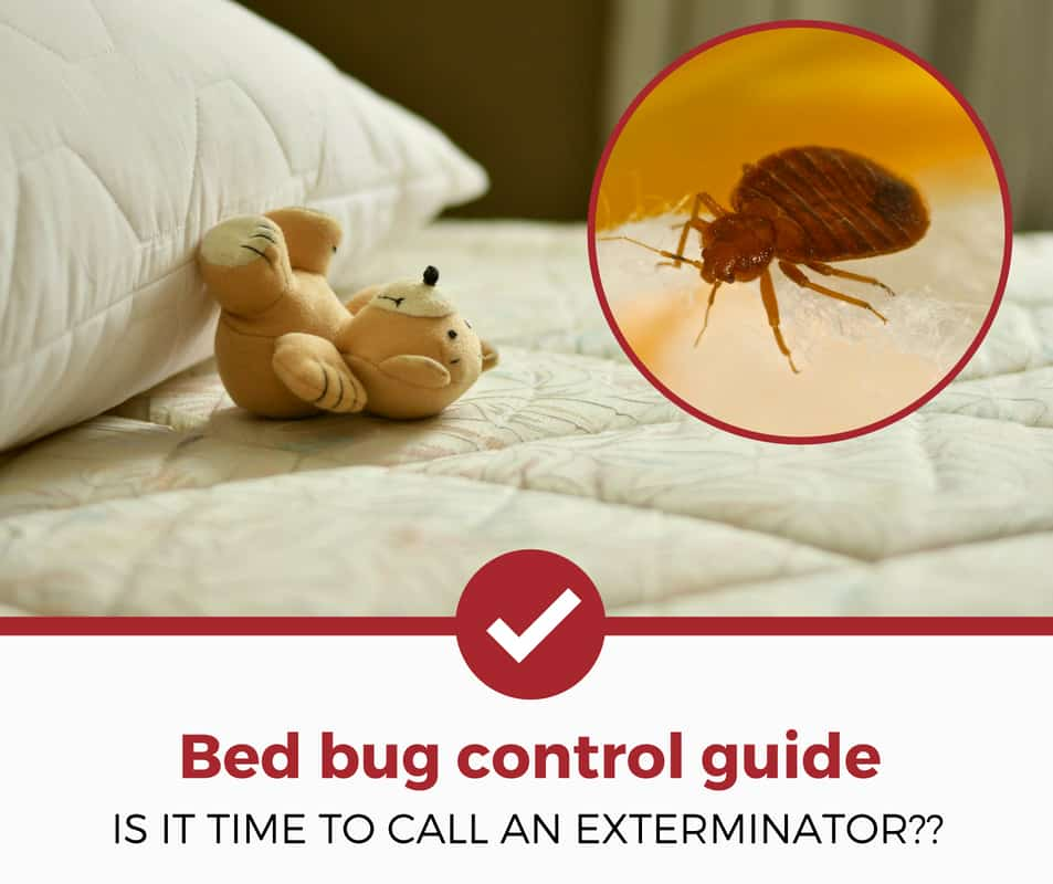 bed bug control guide