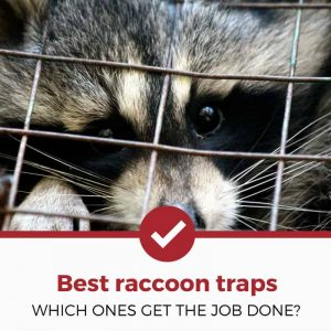 best raccoon traps cover