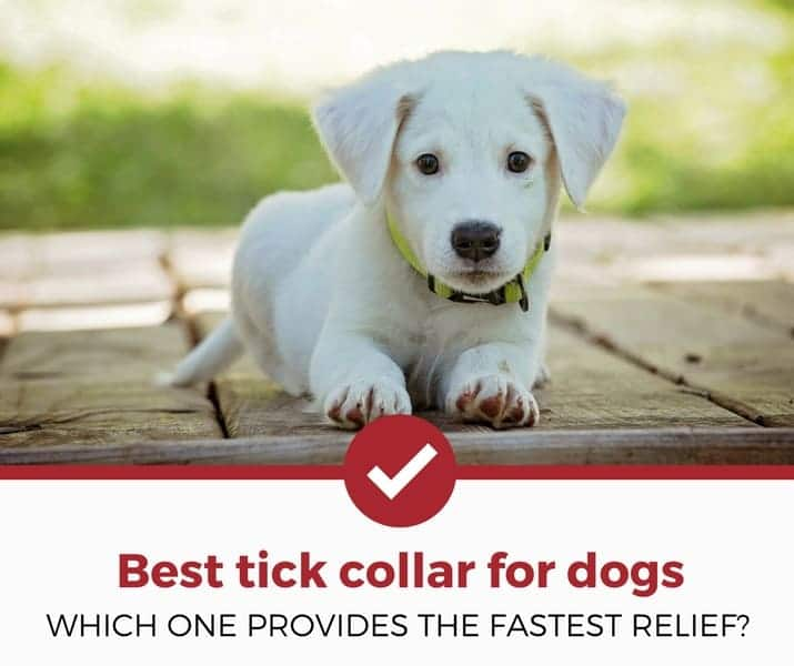 best tick collar FOR dogs