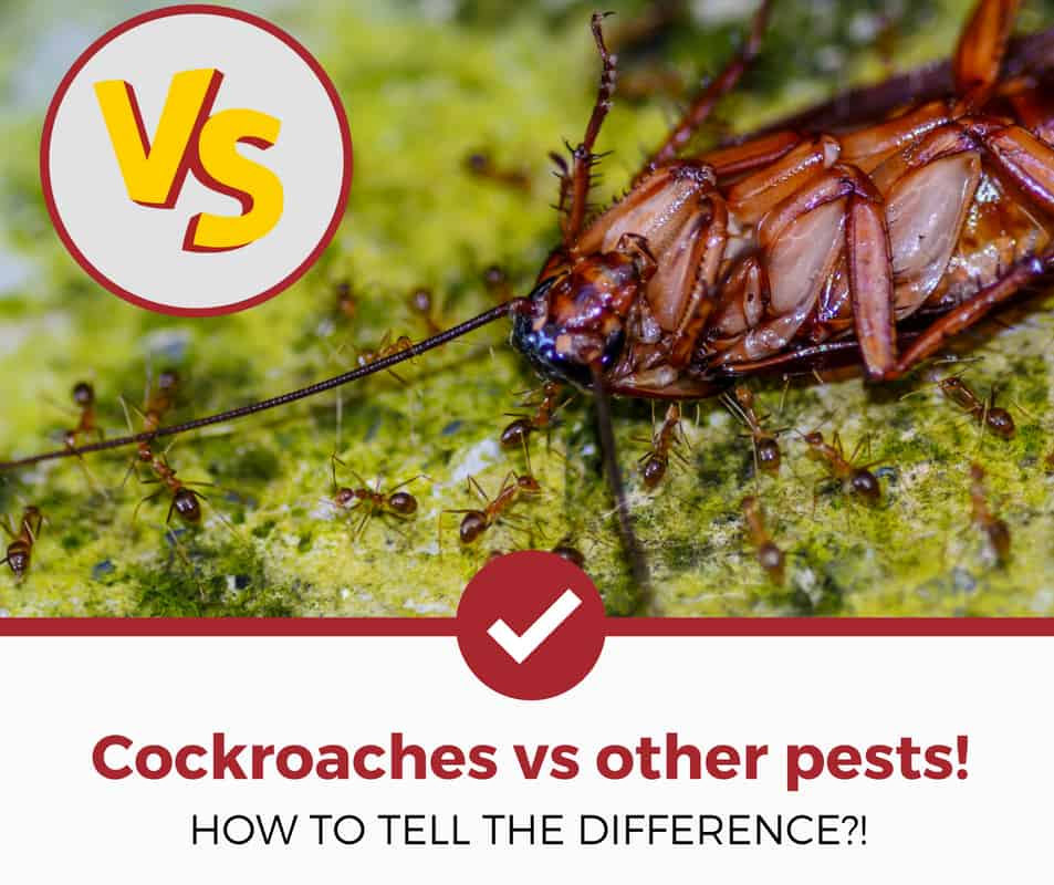 cockroach vs other pests
