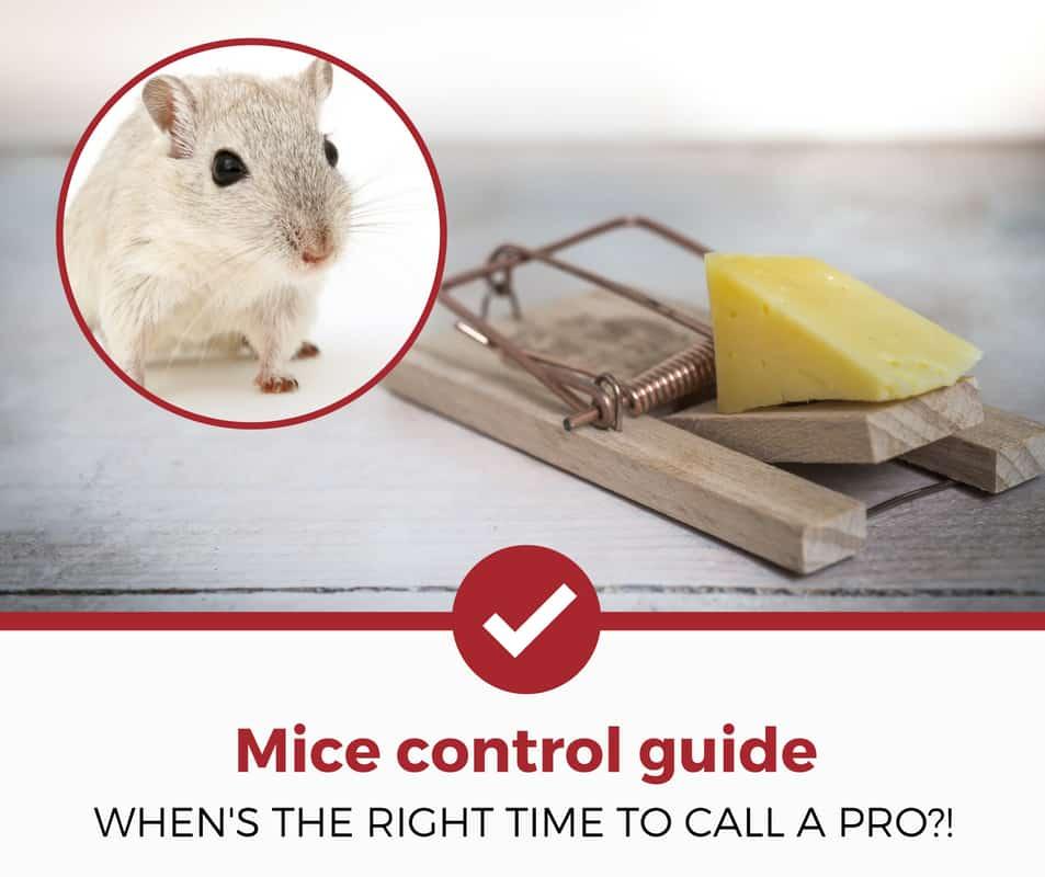 mice control guide