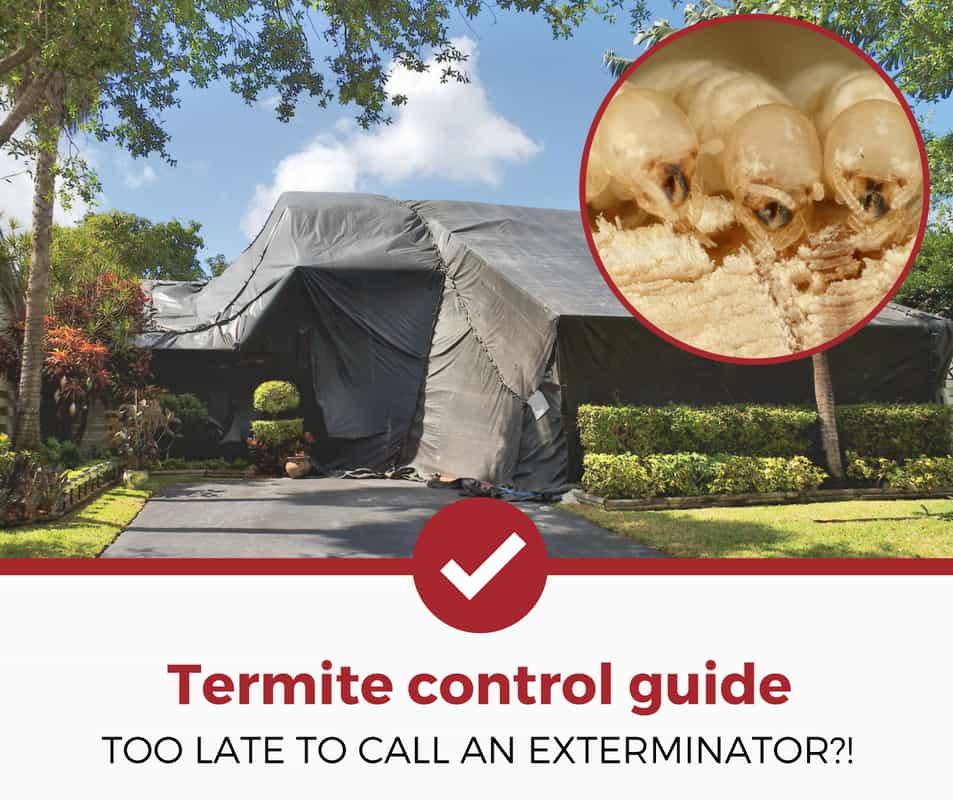 termite control guide