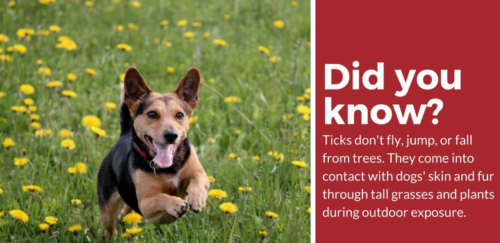 tick prevention repellent for dogs facts