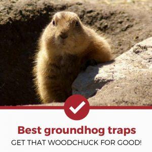 best groundhog traps