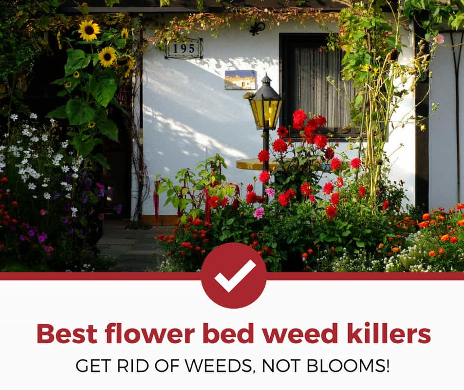 best weed killers for flower bed