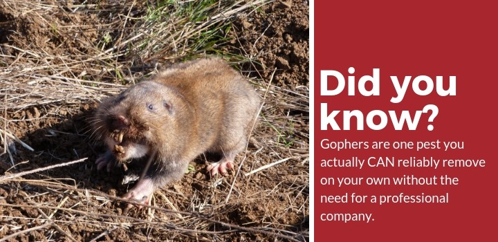 need pest control company gophers