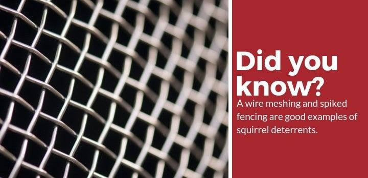 examples of squirrel deterrents