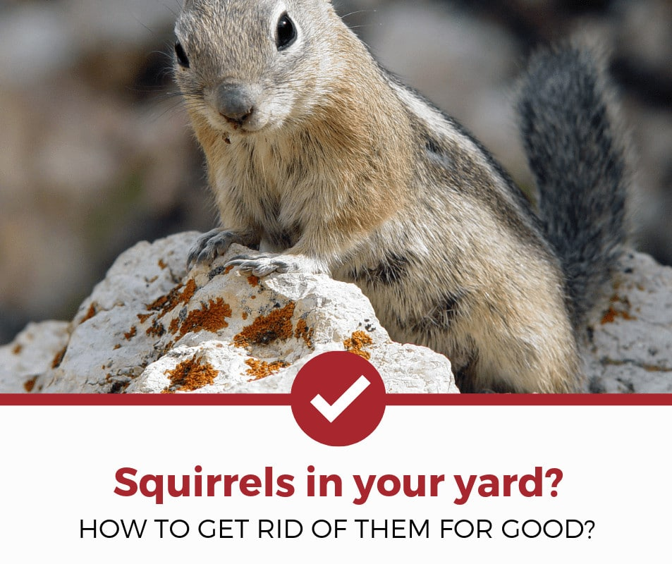 how to get rid of squirrels yard