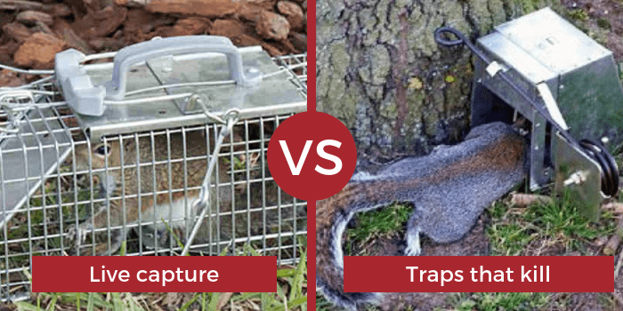 live capture vs traps that kill