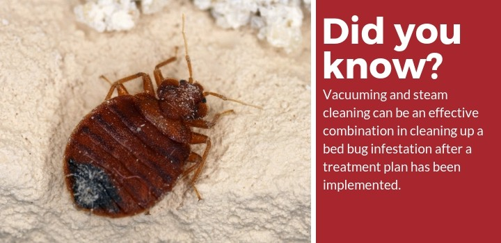 bed bug vacuuming and steam cleaning facts