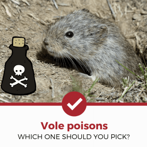 top 5 best vole poisons reviewed
