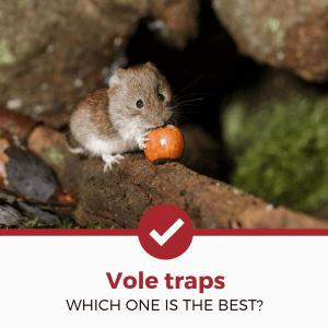 best vole traps